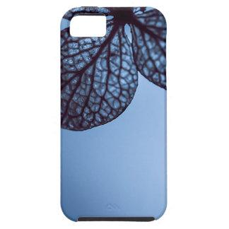 Blue Hydrangea iPhone 5 Covers