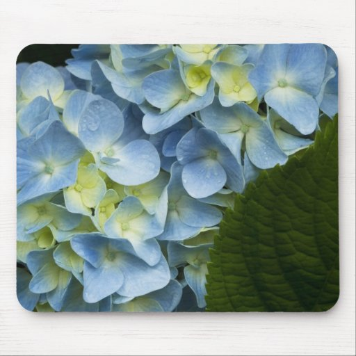 Blue Hydrangea Mouse Pad