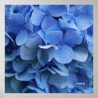 Blue Hydrangea Poster