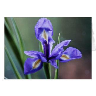 Blue iris card