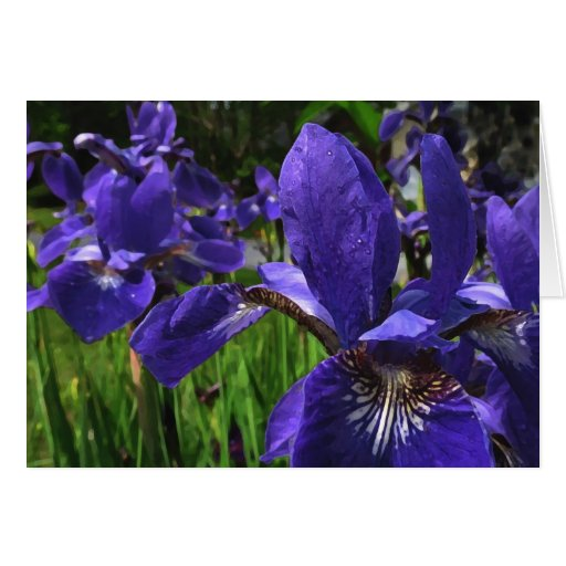 Blue Iris Garden Note Card