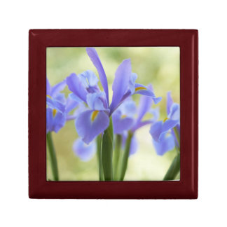 Blue Iris Gift Box