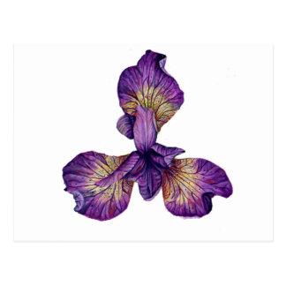 Blue Iris Siberica Flower Postcard