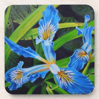 Blue Japanese Iris rich blue flower Coaster