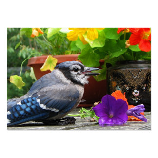 Blue Jay and Flowers ATC Business Cards