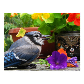 Blue Jay and Flowers Postcard