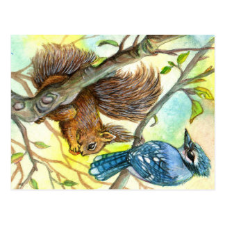 Blue Jay And Squirrel Postcard
