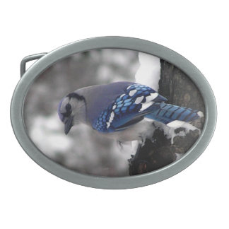 Blue Jay Belt Buckle