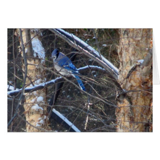 Blue Jay Bird in Winter Trees Card