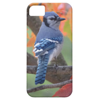 Blue Jay Case For The iPhone 5