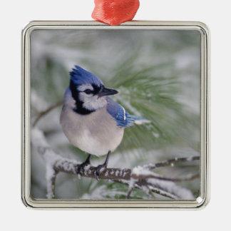 Blue Jay, Cyanocitta cristata Silver-Colored Square Decoration