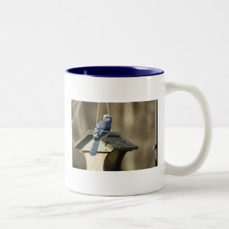 Blue Jay Feathers Mug