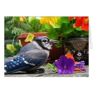 Blue Jay Flowers Mother's Day Card