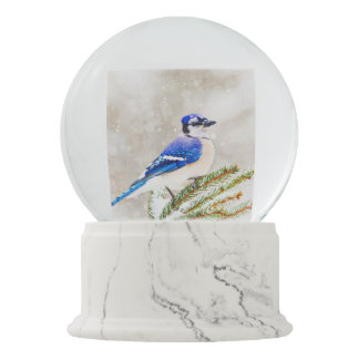 Blue jay in a pine tree with snow snow globes