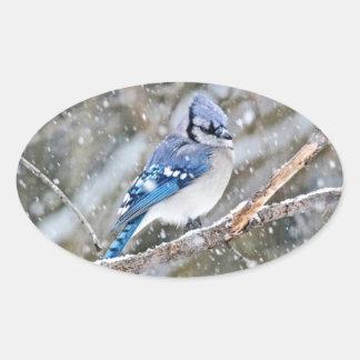 Blue Jay in a Snowstorm Oval Sticker