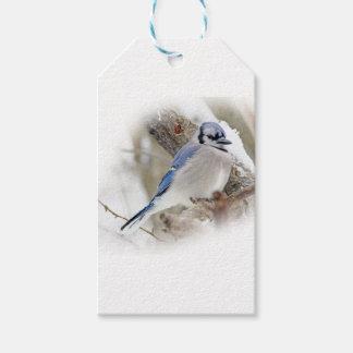 Blue Jay in Winter Snow