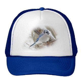 Blue Jay in Winter Snow Cap