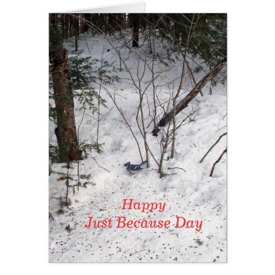 Blue Jay -Just Because Day. Card