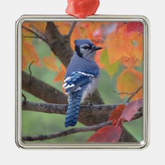 Blue Jay Metal Ornament