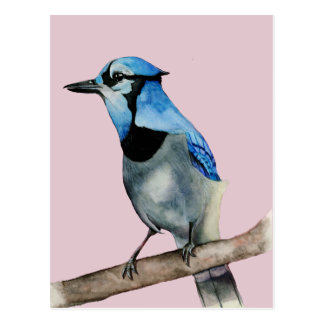 Blue Jay on Branch Watercolor Painting Postcard