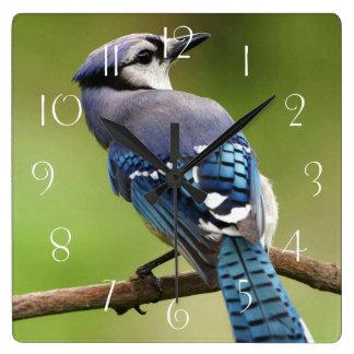 Blue jay square wall clock