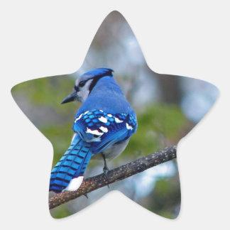 Blue Jay Star Sticker