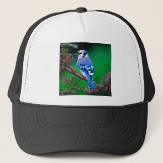 Blue Jay Trucker Hat