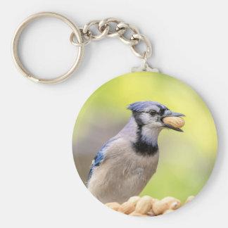 Blue jay with a peanut key ring