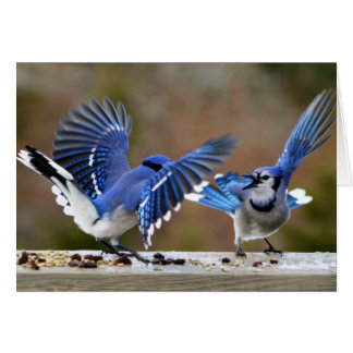 Blue Jays Squabbling over lunch Card