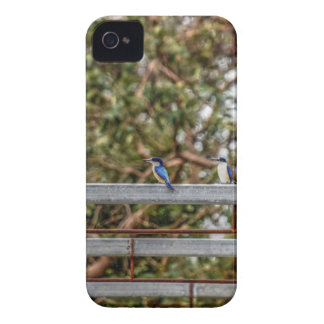 BLUE KINGFISHER QUEENSLAND AUSTRALIA ART EFFECTS iPhone 4 COVER