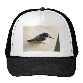 BLUE KINGFISHER QUEENSLAND AUSTRALIA CAP