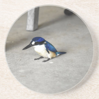 BLUE KINGFISHER QUEENSLAND AUSTRALIA COASTER