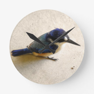 BLUE KINGFISHER QUEENSLAND AUSTRALIA ROUND CLOCK