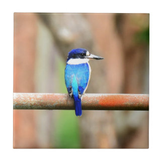 BLUE KINGFISHER QUEENSLAND AUSTRALIA SMALL SQUARE TILE