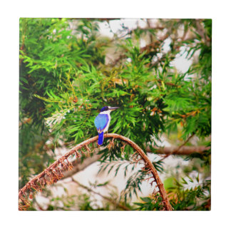 BLUE KINGFISHER QUEENSLAND AUSTRALIA TILE