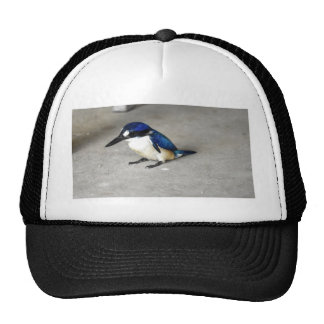 BLUE KINGFISHER RURAL QUEENSLAND AUSTRALIA CAP