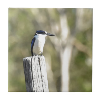 BLUE KINGFISHER RURAL QUEENSLAND AUSTRALIA SMALL SQUARE TILE