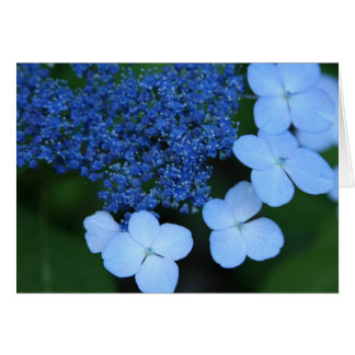 Blue Lace Greeting Card