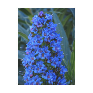 Blue Lily Of The Nile Flower Canvas Print