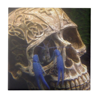 Blue lobster crayfish hanging out in a skull eye ceramic tile