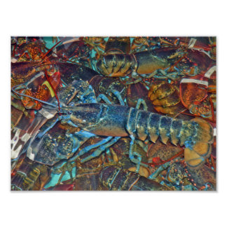 Blue Lobster, Maine Poster