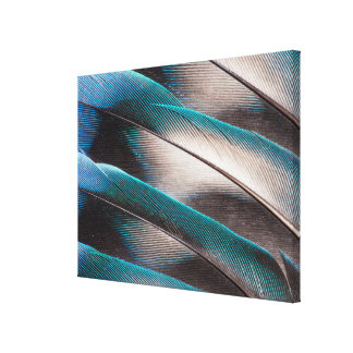 Blue Love Bird Feather Design Canvas Print