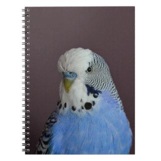 Blue Lovely Budgie Notebook