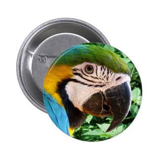 Blue Macaw Parrot Button