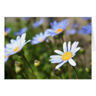 Blue Marguerite Flowers Greeting Card,Note Card