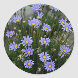 Blue Marguerite Flowers Sticker