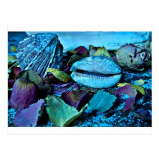 Blue maritime Symphony OF Seashell Postcard