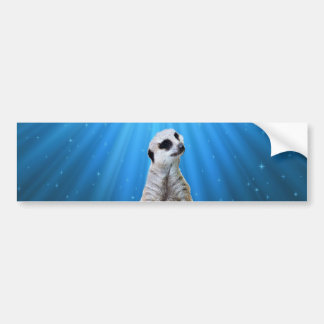 Blue Meerkat Night,_ Bumper Sticker
