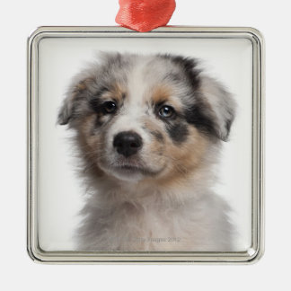 Blue Merle Australian Shepherd puppy close-up Metal Ornament