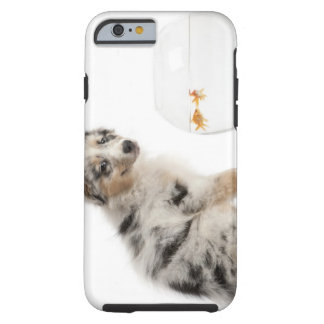 Blue Merle Australian Shepherd puppy looking at Tough iPhone 6 Case